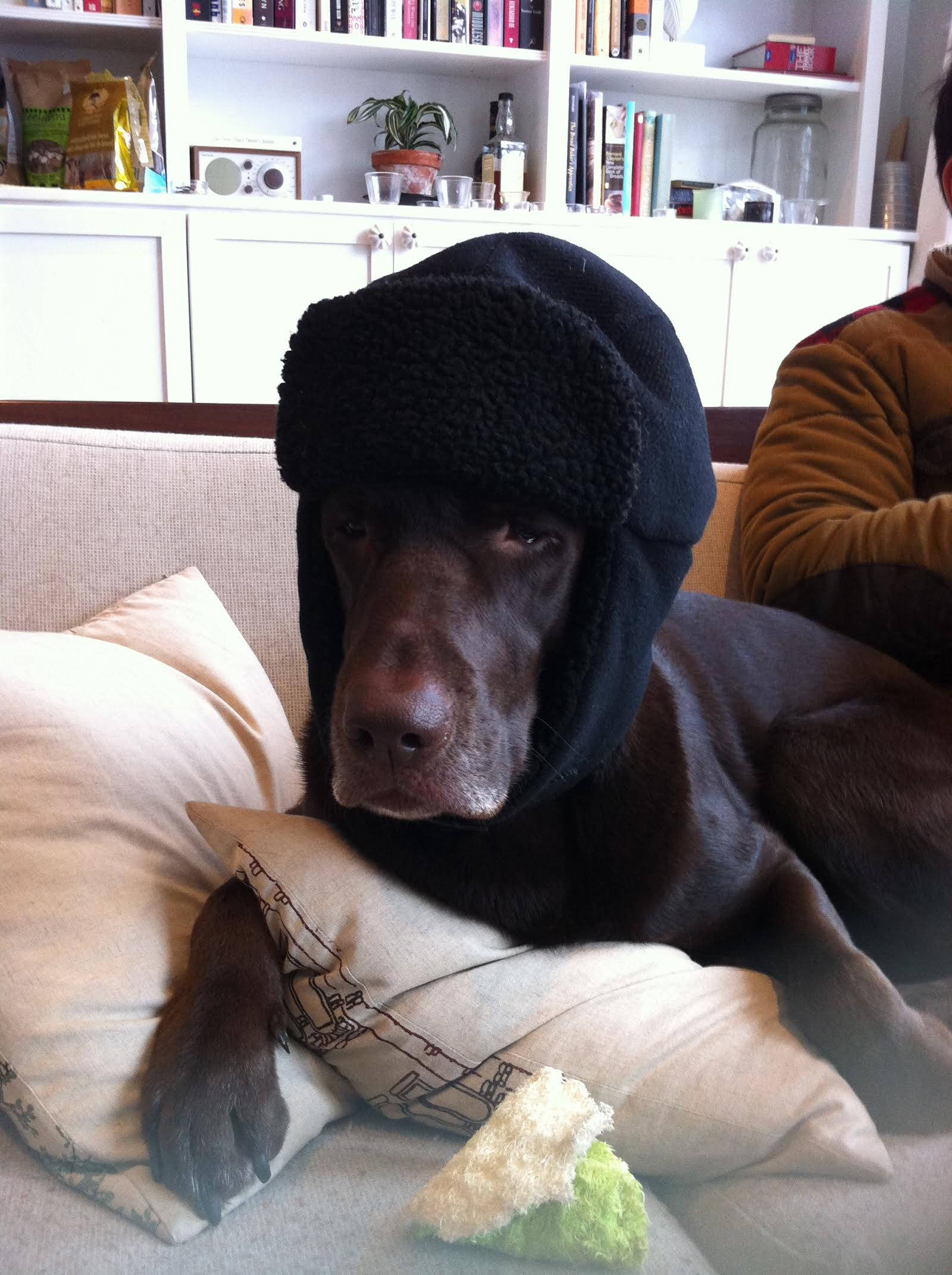 Dog with crazy hat on