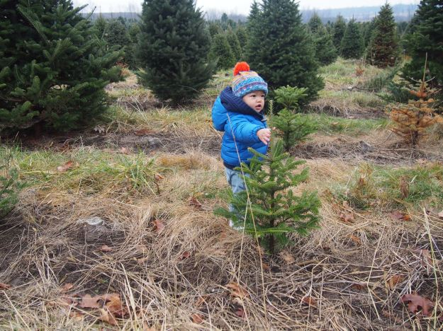 A Caleb-sized tree.